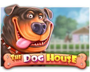 the-dog-house-300x240-slot-review-Pragmatic-Play